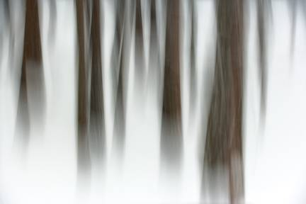 Winter Forest, Yosemite National Park, California 2007