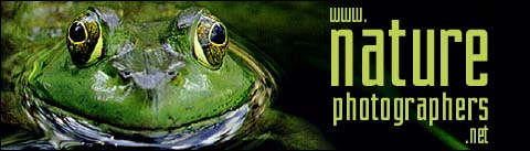 Nature Photographers, an online magazine dedicated to the nature and wildlife photography enthusiast.