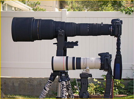 a review of the sigma 300 800mm f5.6 zoom lens luminous
