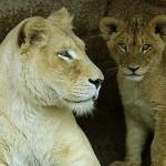Captive Wildlife