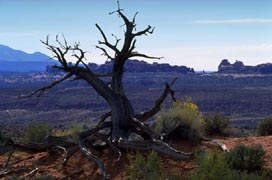Bare Tree in Arches