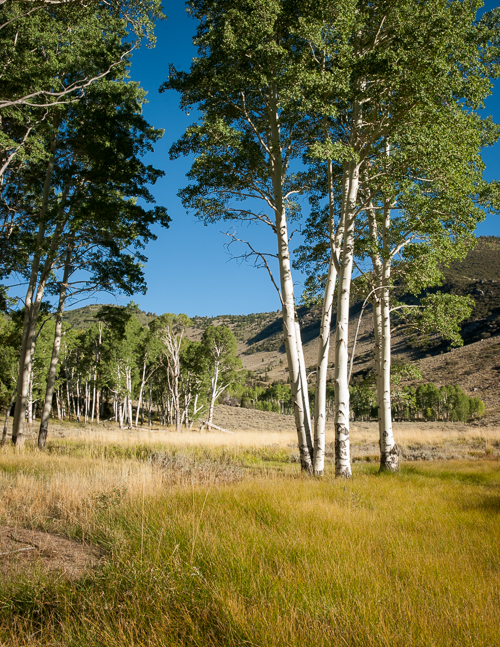 Snake Creek Aspens