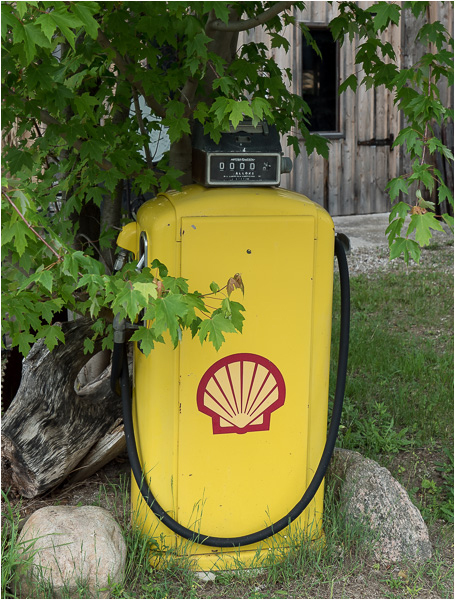 Shell. Clearview, Ontario. June, 2014