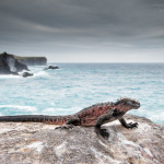 Private Galapagos Photo Cruise With Michael Reichmann