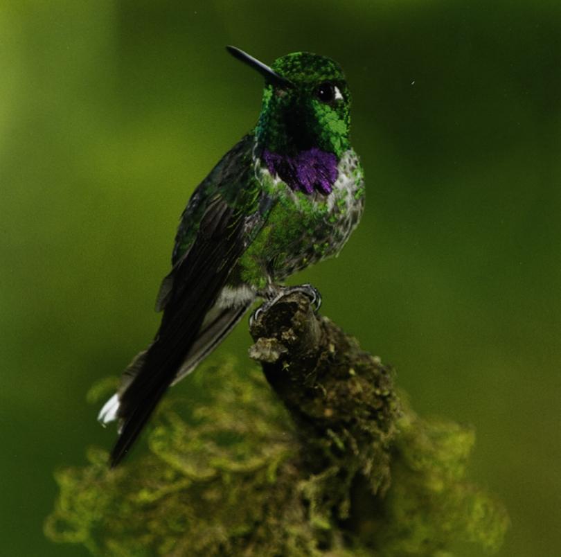 Canon ImagePROGRAF PRO-1000 Printer Review - Luminous Landscape