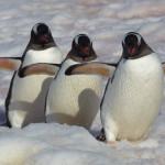 Final Call – The Ultimate Antarctica Adventure