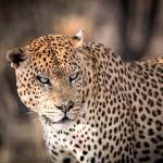 The Photographic Diversity of Namibia