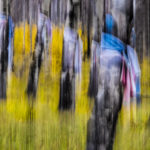 Ghosts Among The Aspens