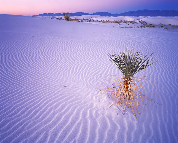 1a-White-Sands-Sunrise#1-5x72