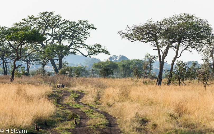 """Meandering Safari Tracks"", Tarangire National Park, Tanzania"