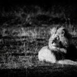 Monochrome Wildlife Photography