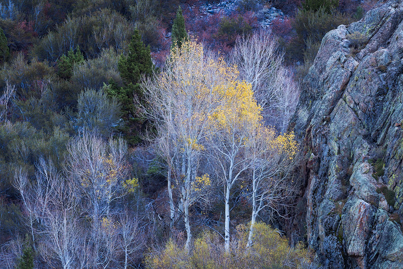A colorful mix of trees and plants in California's Eastern Sierra.