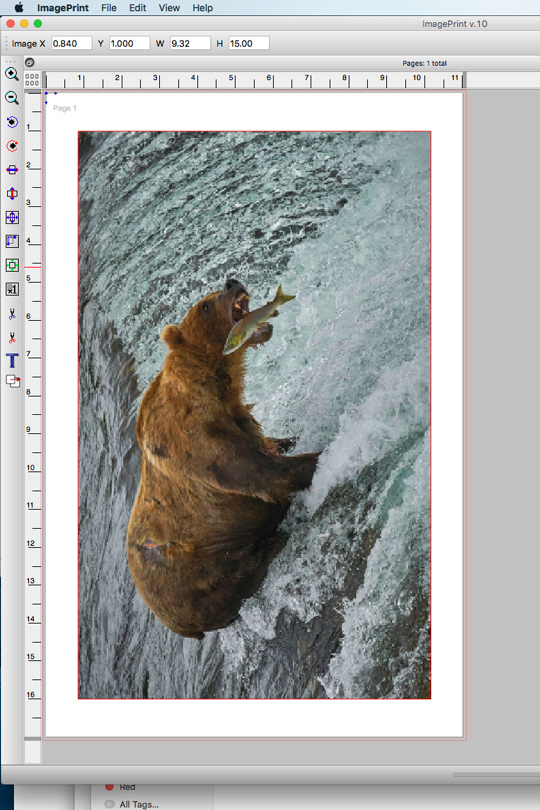 This shows what a print will look like. Tools allow you to center the image on the paper and scaling windows at the top allow you to set the dimensions of the image. Very handy is you want to center your images with a border around them.