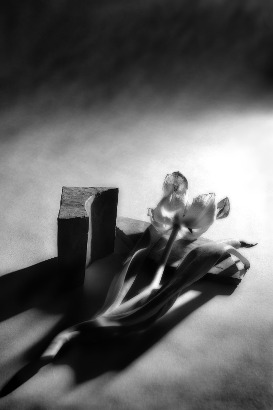 Tulips lie next to a carved block of wood, with intense shadows