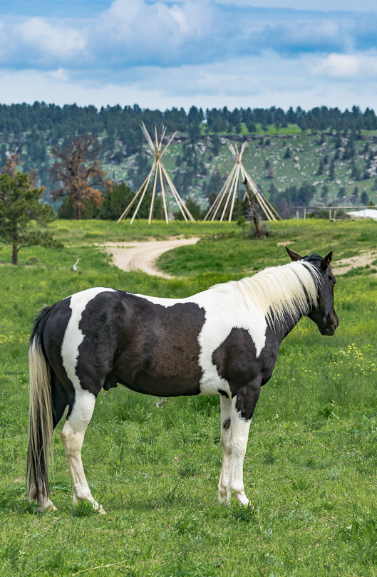 """A Painted Pony Looks Toward the Sioux Ceremonial Site"" H Stearn"