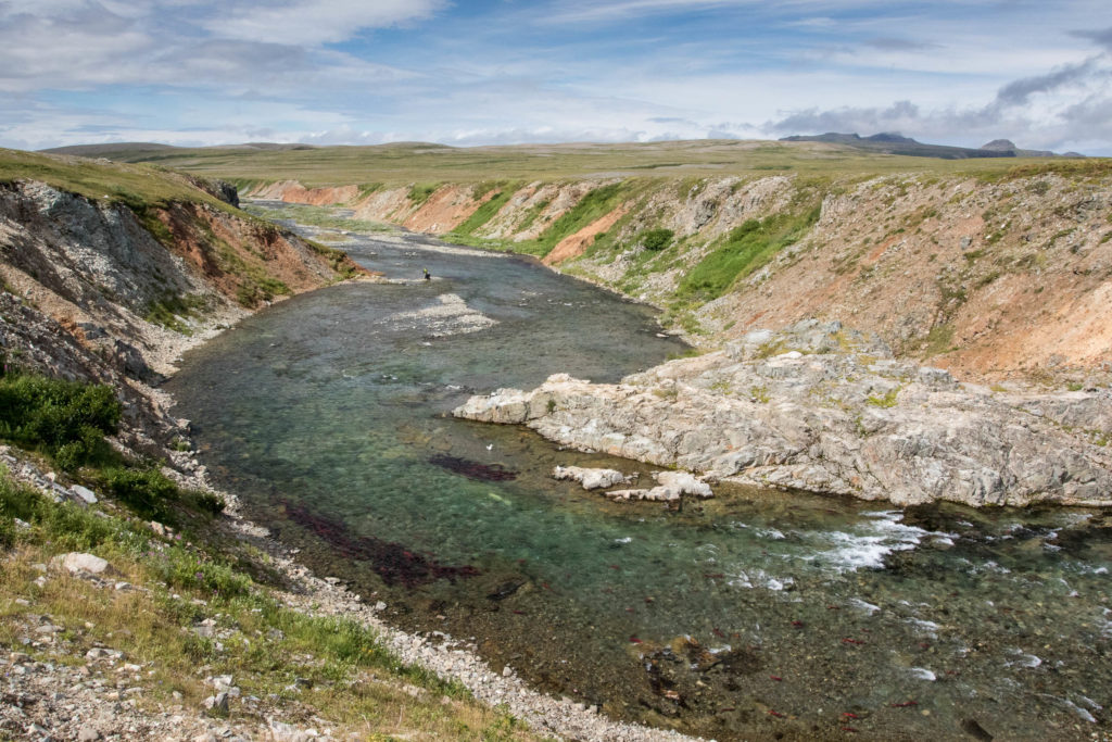 A river in the Katmai Preserve where salmon are spawning. You can see groups of salmon gathered near the banks as they fight to make their way up river from the Pacific Ocean.
