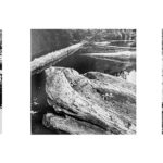 Triptychs Part 3 of 3: Black and White Examples