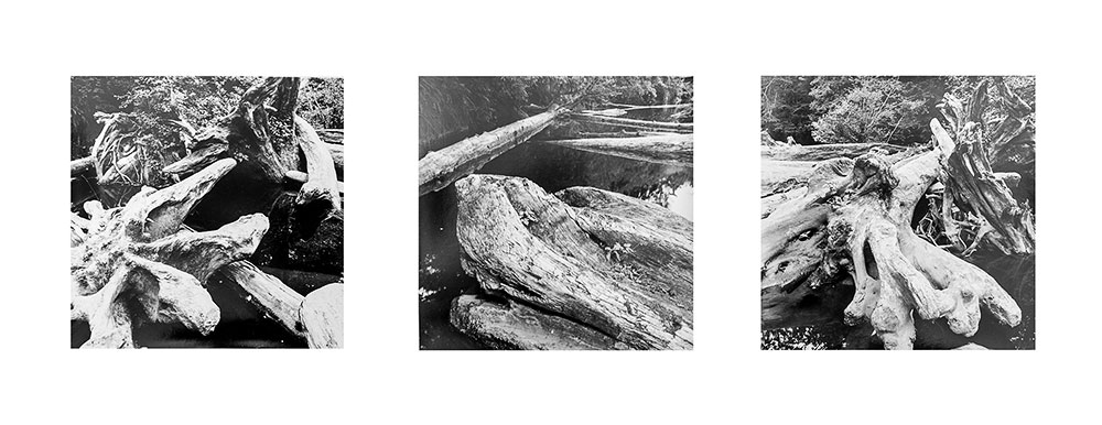 Trees Black & White Triptych #1