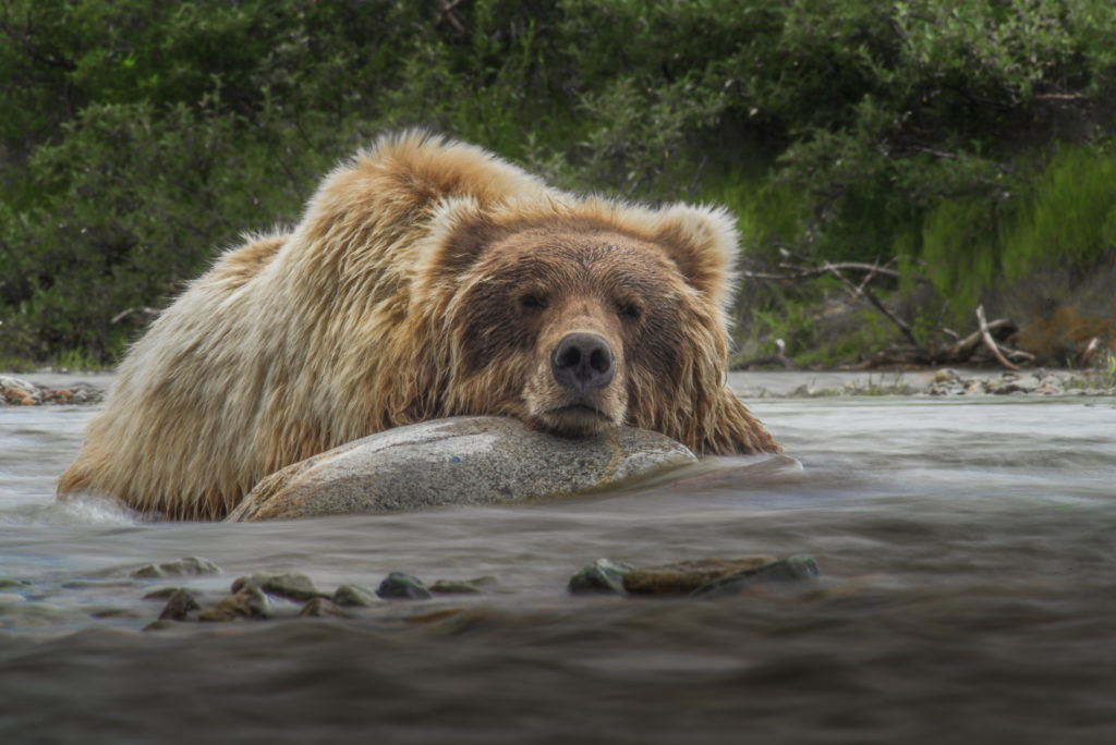 Katmai Workshop With Art Wolfe - Art Wolfe Grant Winner