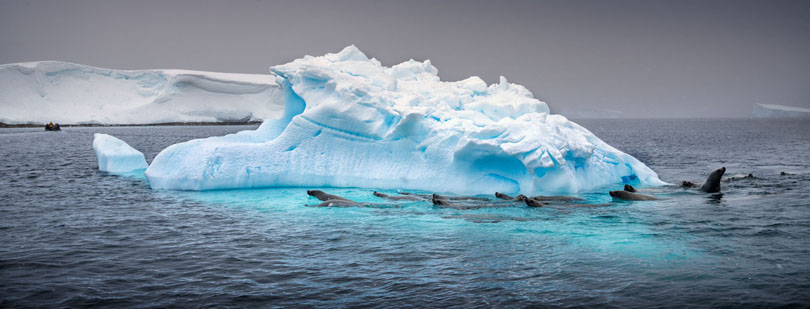 Iceberg and Seals