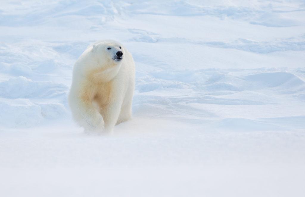 Svalbard. Feet Separation.