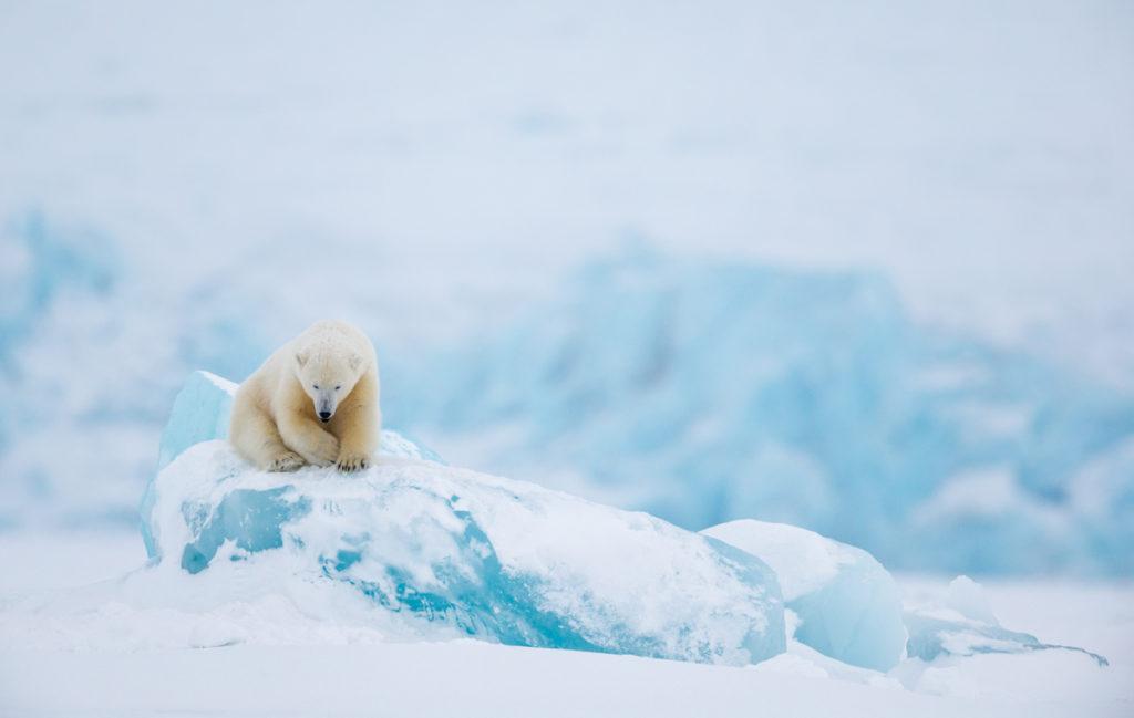 Svalbard. Long Lens.