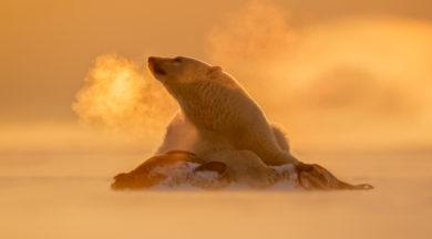The Art of Polar Bear Photography