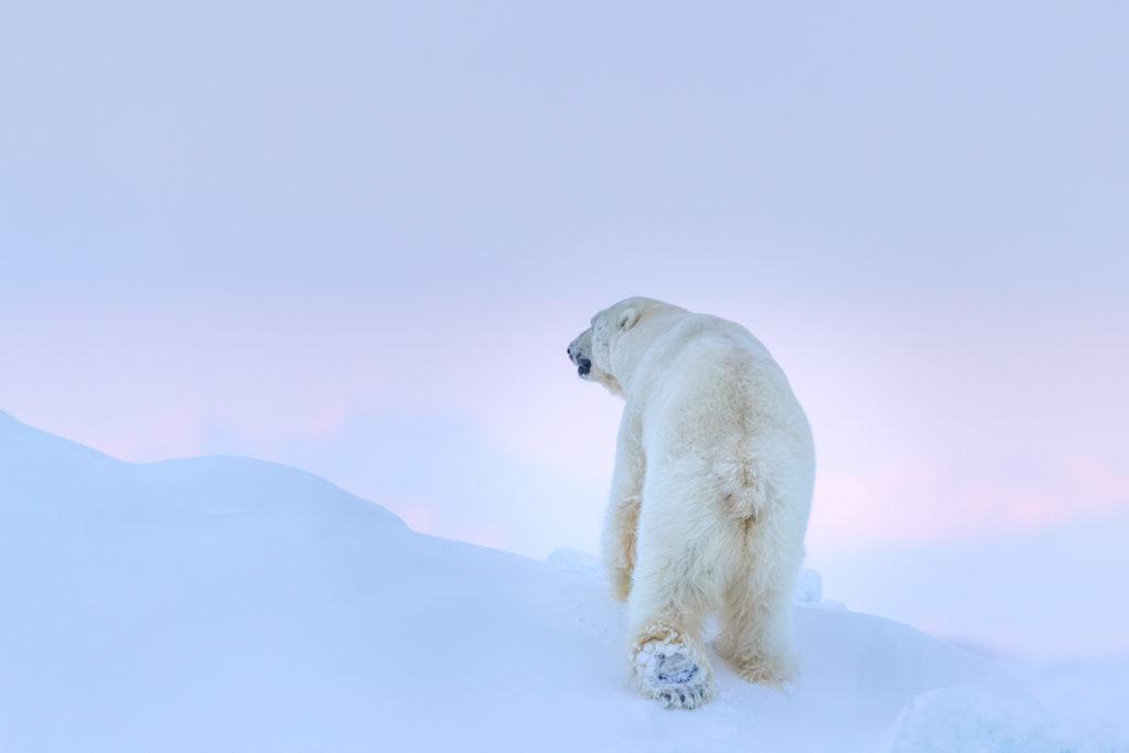Svalbard. Pink Light 2.