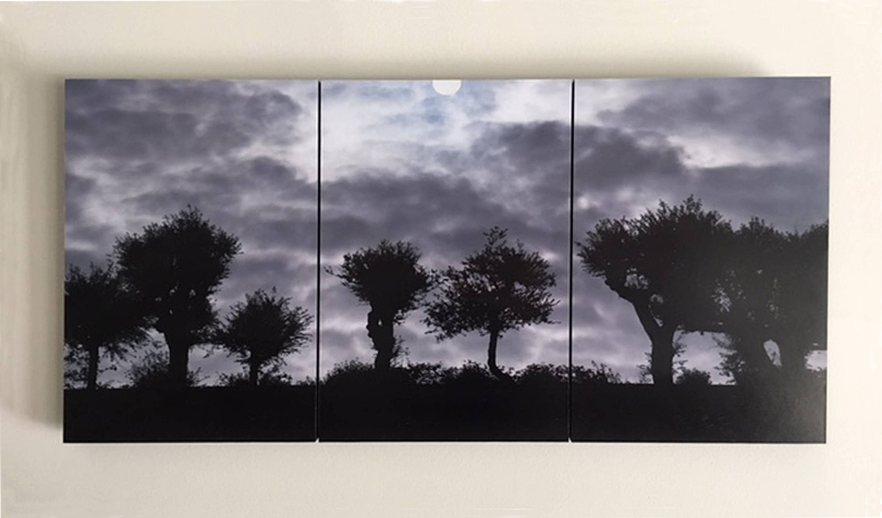 "Tree Triptych as displayed. Shown here mounted on an off-white wall. You can see that there's no frame, but the Standout Mount has depth (it casts a shadow). Roughly 39 x 19""."