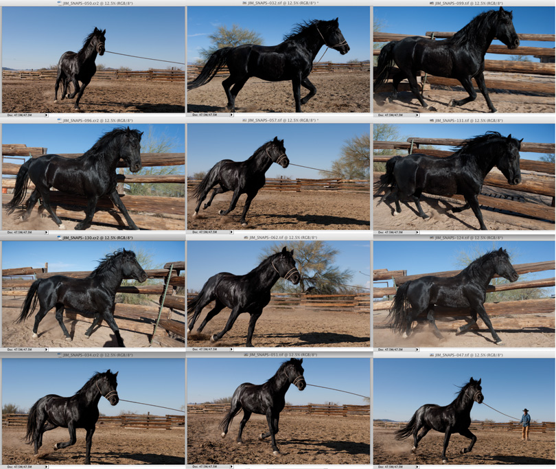 Original images of horses from the library