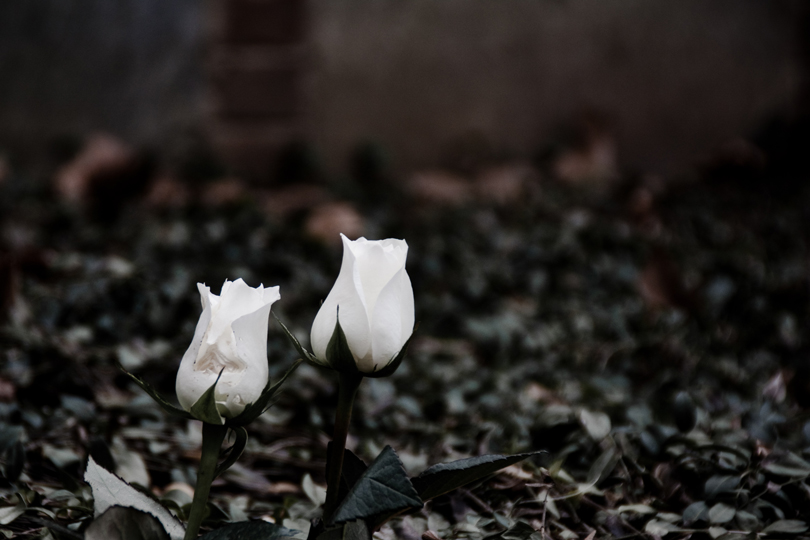 """A Lone Pair"" Photographing these two vibrant flowers in a cemetery creates an engaging juxtaposition."