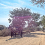 Shot with DXO ONE Camera. Horse-ride through Bagan.