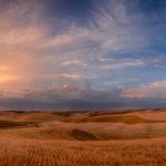 Harvest Palouse At Sunset