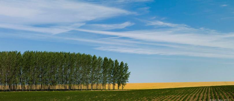 A Row Of Trees