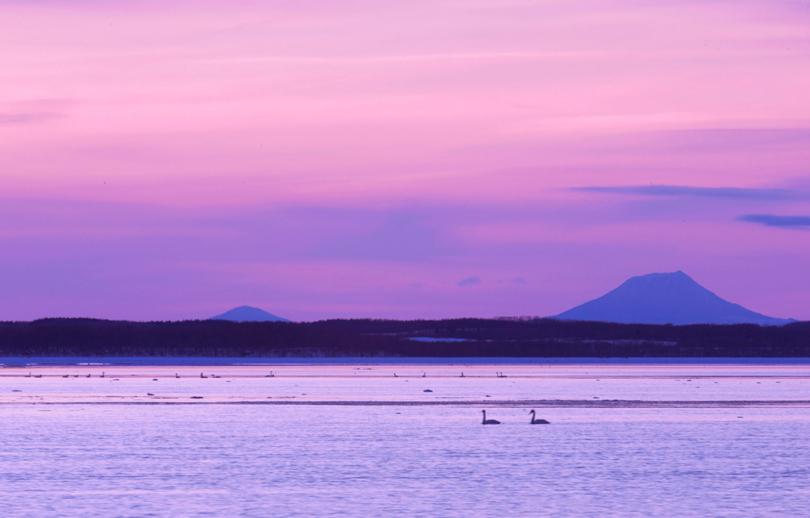 Hokkaido. Swans At Sunset