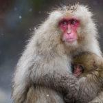 Japan 2019 Winter Wildlife Photo Expedition Workshop