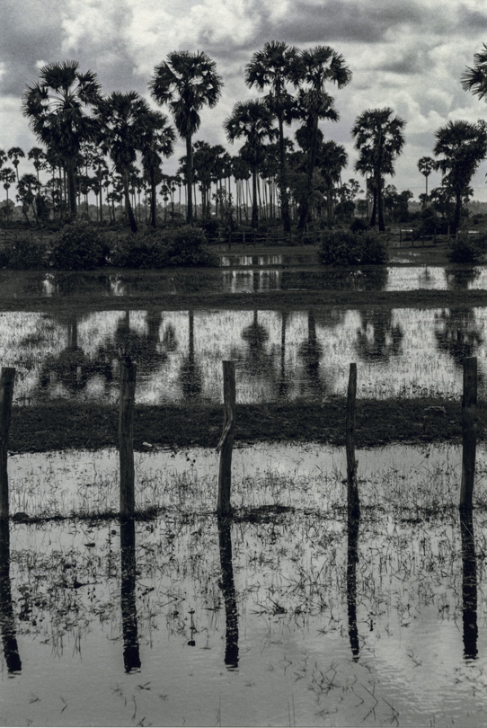 Figure 14. Angkor Wat, Trees and Water, 2004