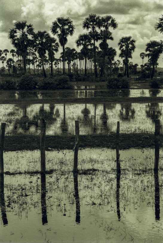 Figure 15. Angkor Wat, Trees and Water, 2004, toned