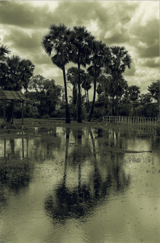 Figure 17. Angkor Wat, Tress and Water 2, 2004, toned