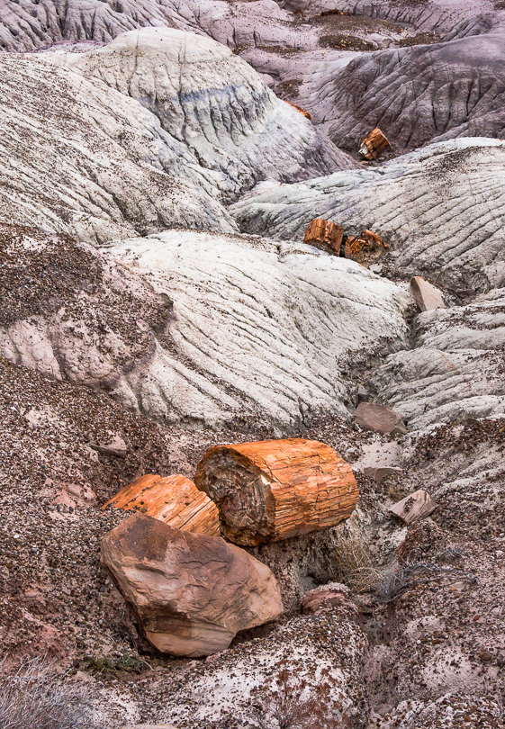 Tree trunk sections, Petrified Forest NP, AZ