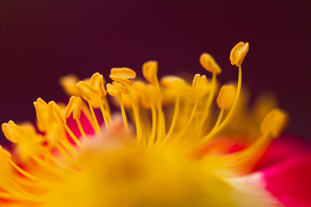 A Beginner's Guide to Composition in Macro Photography